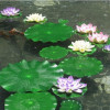 Водное растение искусственное